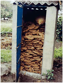 toilet-pic-1-cow-dung