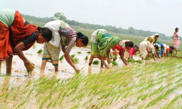 BiharAgriculture-CoverStory-620x370-26042013