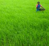 Farm_Life_Village_India-sc-width 160PX_ht 150PX