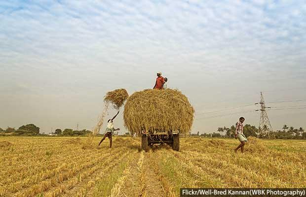 Farmer crisis_620