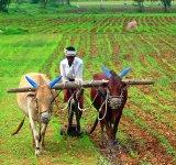 farming 1-SC-WIDTH 160px_HT 150px