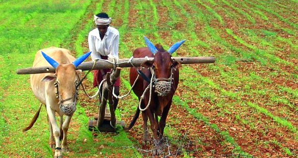 farming-COVER-STORY-WIDTH-600px_HT-320px