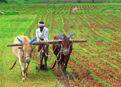 farming-SPL-WIDTH 250px_HT 180px