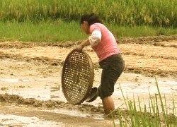 farming-special report-27082012-250x180