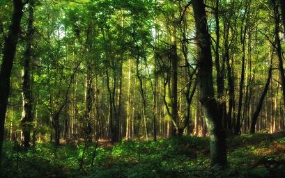 forest-ARTICLE