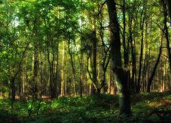 forest-SPL-WIDTH 250px_HT 180px