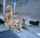 srinagar dogs -SC-WIDTH 160px_HT 150px